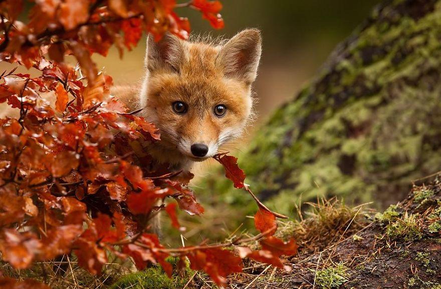 Baharın gelişini şaşkınlıkla karşılayan 22 sevimli hayvan